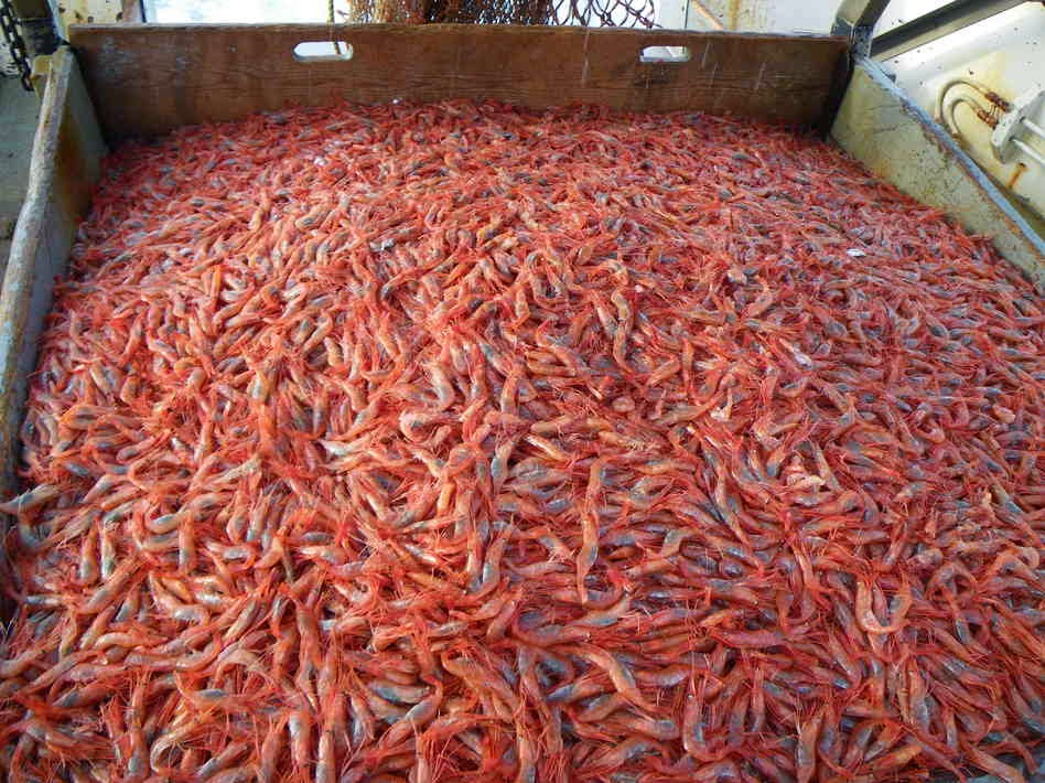 http://www.nasdaq.com/article/indonesia-dominates-shrimp-market-share-in-us-20150319-00109