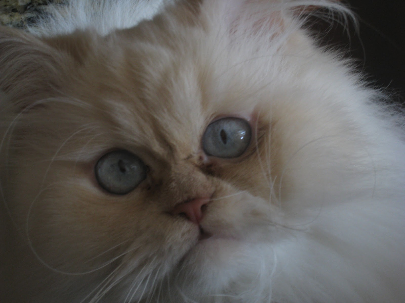 Cats Eyes Change Color Eyes Could Change Color