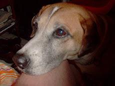 nuestra perra Sasha...