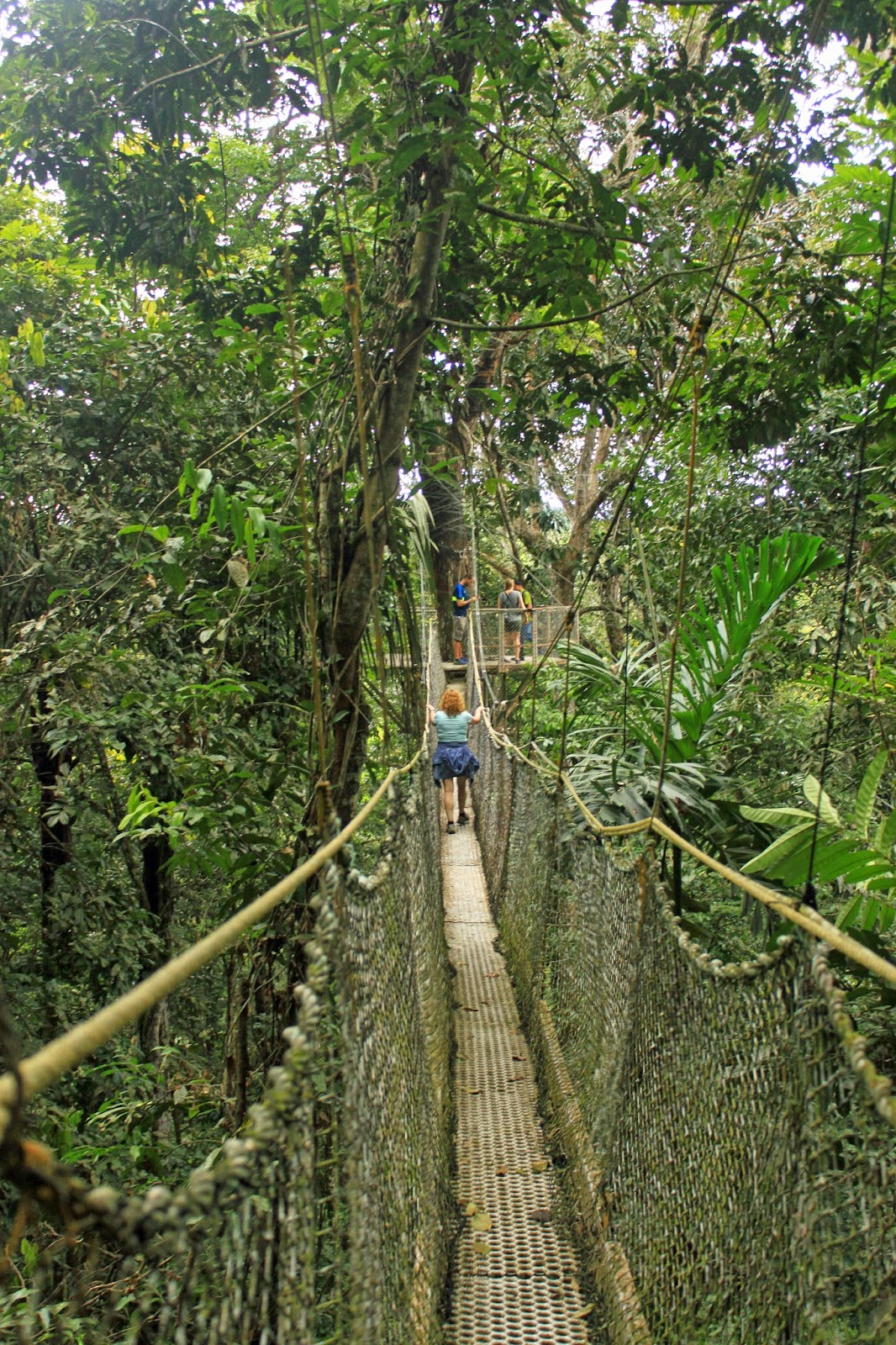(Iwokrama Canopy Walkway © Ian Loyd Reef and Rainforest Tours) & The Ginger Naturalist : October 2014