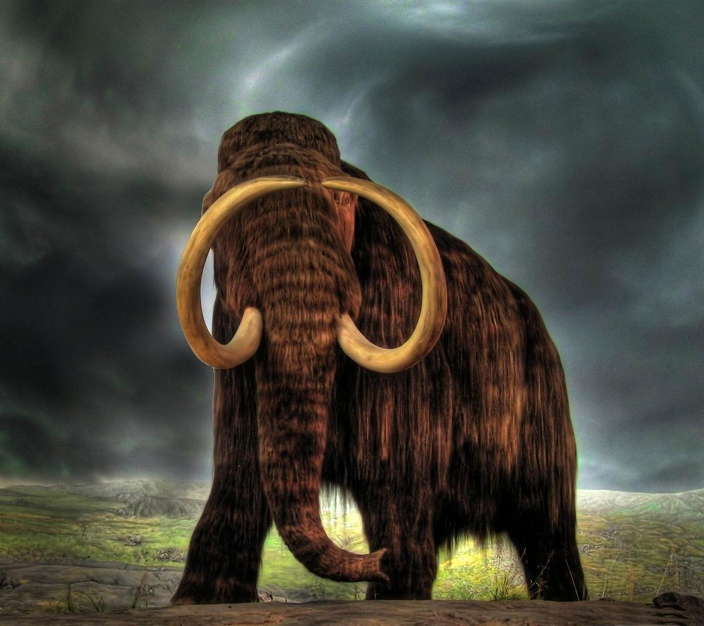 http://4.bp.blogspot.com/-OMHMaMLi3nY/UaK1xCrJzGI/AAAAAAAARw8/BxhNBvbAGVg/s1600/mammoth-Wild_Animal_HD_Wallpapers_1200x900.jpg