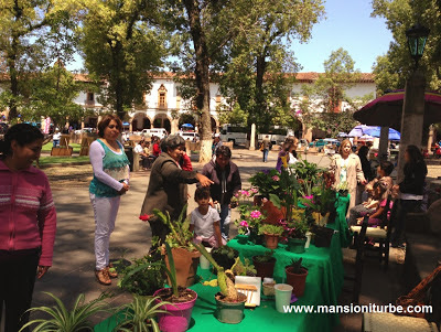 En Pátzcuaro trueque de Plantas en la Plaza Vasco de Quiroga