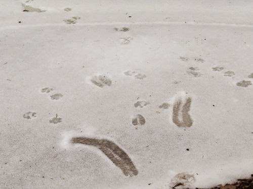 sliding deer tracks
