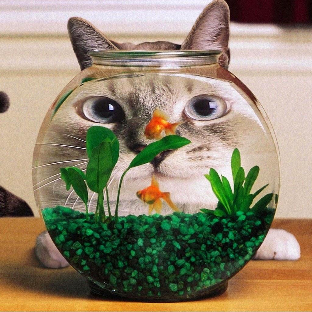 Mặt chú mèo vừa khớp với bể thủy sinh mini nhỉ