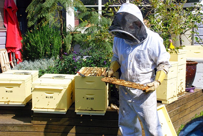 urban bee keeping, hive, honey