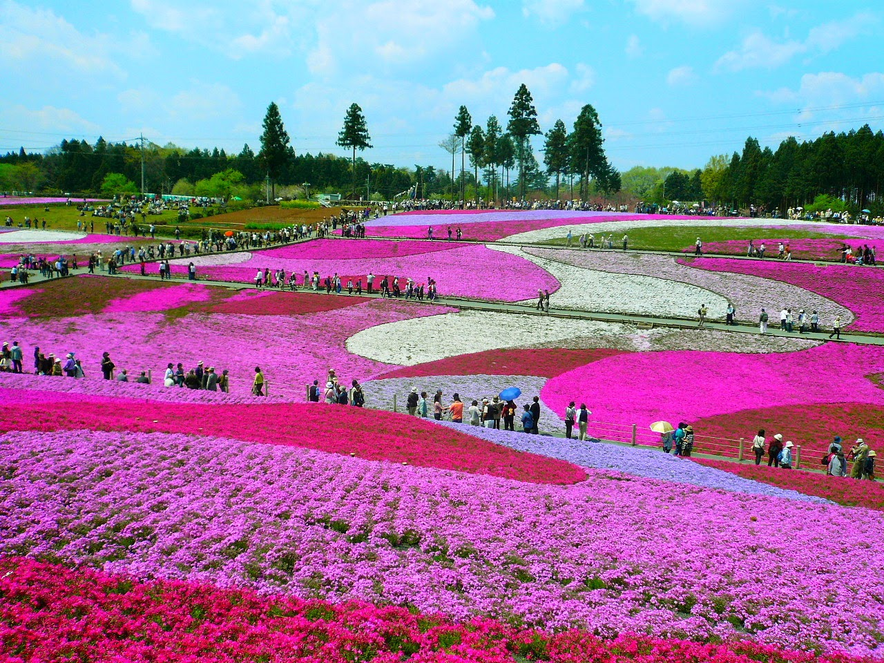Love the most beautiful and best flower fields in the world collection one
