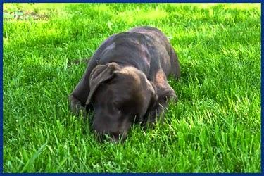 Lustige Bilder Von Hunden - Tierische Schnappschüsse: Lustig, süß, schön: Die besten