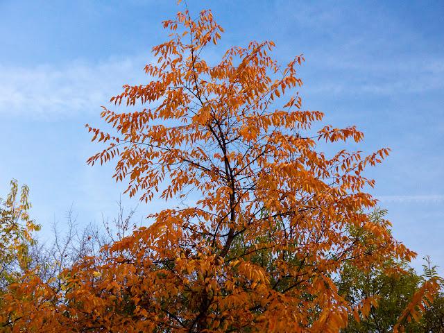 Jesienna fotografia krajobrazu. Kolory jesieni. Ruda Śląska. fot. Łukasz Cyrus, Katowice
