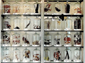 Taxidermy-Display.jpg