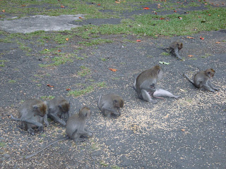 Ubud Monkey Forest Bali Photo 11