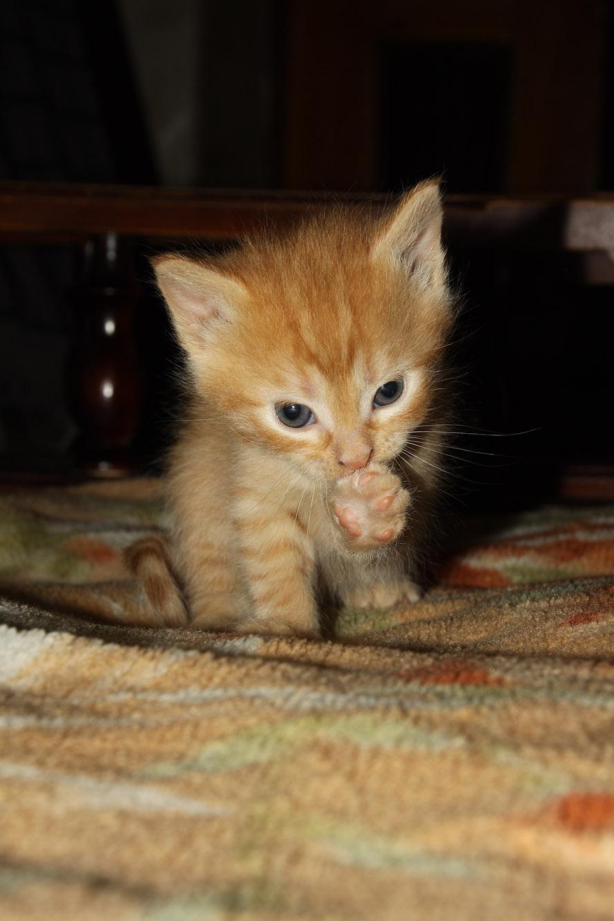 Hayatın her vesileyle kendi elleriyle kedi kulağı nasıl yapılır