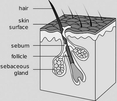Penyebab Rambut Cepat Beruban