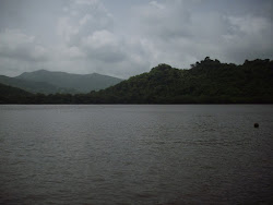 """Sanjay Gandhi National Park"" on the opposite side of ""Vasai Creek"" as seen from ""Nagla Forest ."