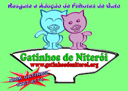 Gatinhos de Niteri
