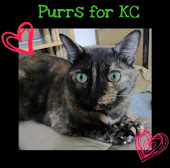Please purr & pray for KC!!