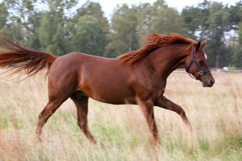 Sweethearts Of The West: A Horse of a Different Color - photo#24