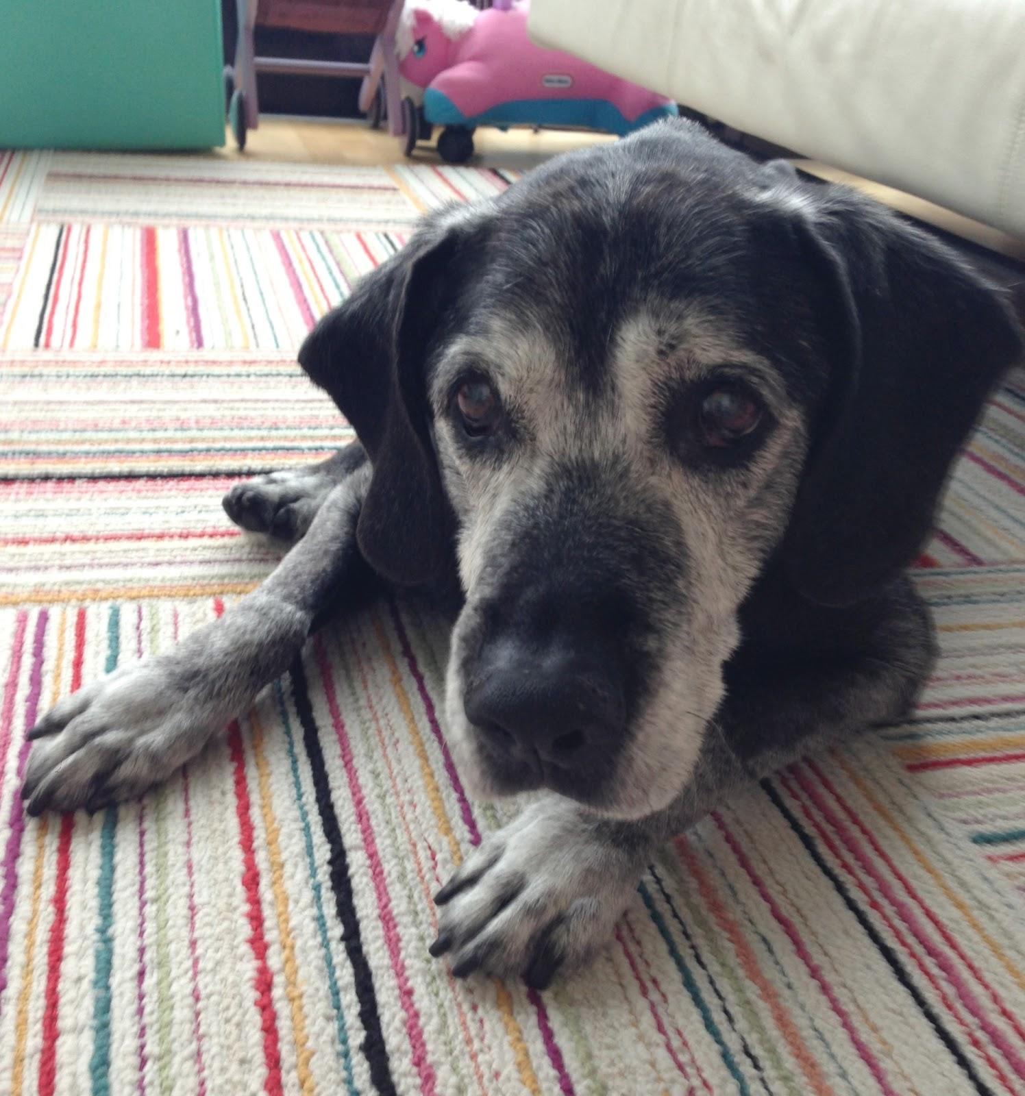 How To Treat Vestibular Disease In Dogs