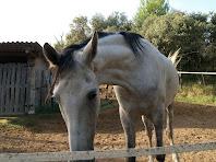 Cavall en un petit tancat a la dreta del camí