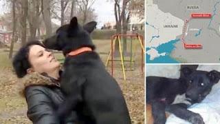 Anjing Ini Jalan 320 Km Cari Perempuan Penolongnya Saat Kecelakaan