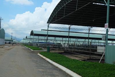 Năm 2014 bầu Đức đã quyết định đầu tư vào lĩnh vực chăn nuôi bò thịt và bò sữa. Đàn bò thịt của HAGL được nhập từ Úc qua đường biển về cảng Quy Nhơn rồi chuyển lên trang trại tại Gia Lai. Được nuôi trong các chuồng bò, đầu tư xây dựng kiên cố, mỗi chuồng khoa