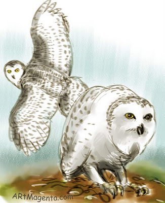 Snowy Owl sketch painting. Bird drawing by artist and illustrator Artmagenta