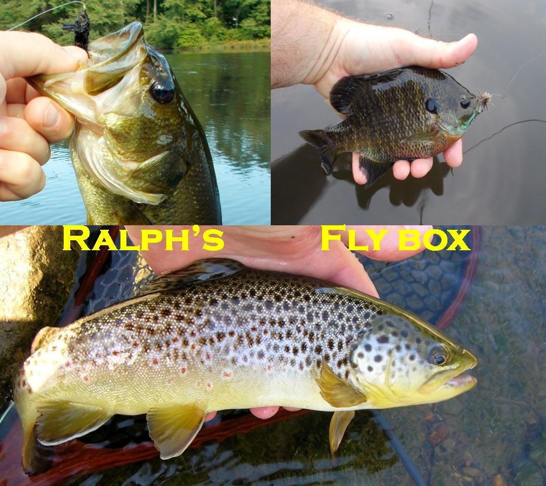RALPHS FLY BOX
