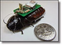 Picture of cockroach