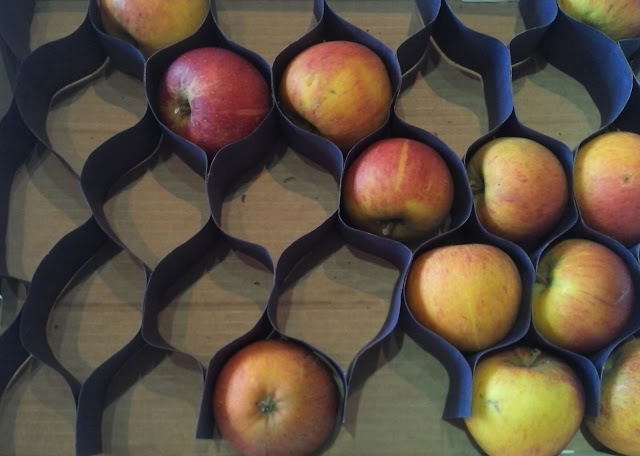 box of coxes apples