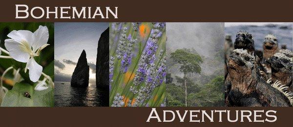 BOHEMIAN adventures