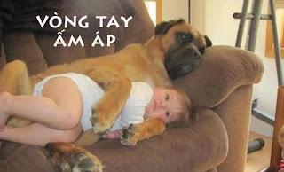 Những hình ảnh hài hước nhất