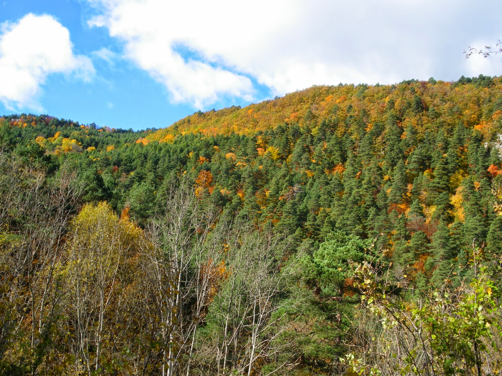 Serra de Catllaras a la tardor Fageda Alt Bergueda Santuari de Falgars la Pobla de Lillet