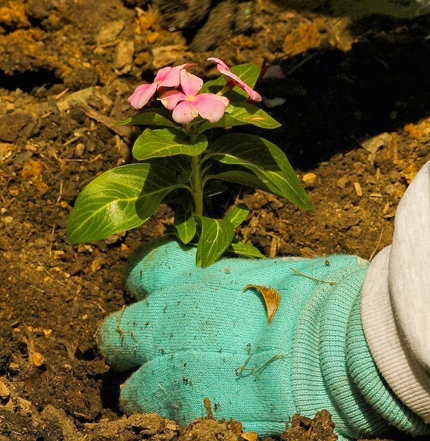 El jard n sin mantenimiento no existe jardinosfera - Jardines sin mantenimiento ...