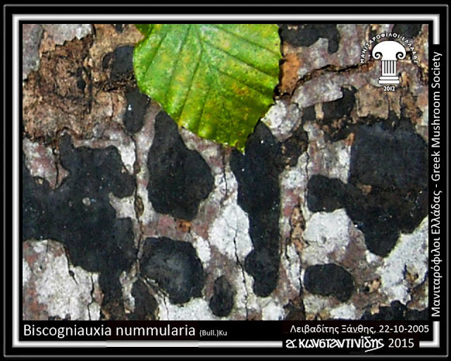 Biscogniauxia nummularia (Bull.)Kuntze
