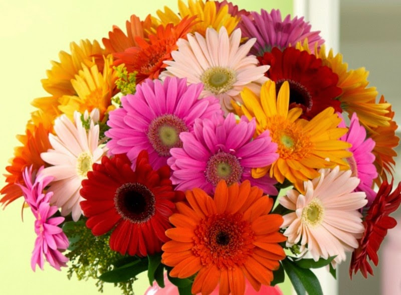 Health Disease And Genetics Gerbera Flower The Fifth