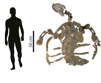 prehistoric marine turtle Desmatochelys