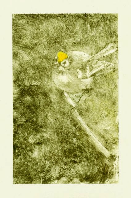 Goldcrest dryoint etching print