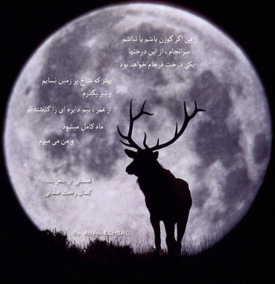 ماه کامل میشود و من می میرم
