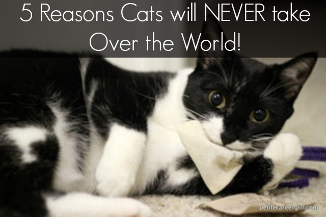 5 Reasons Cats will never take over the world