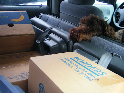 Alfie's in the van, standing between the driver's and passenger's seats and facing back over a sea of boxes that have been loaded up for moving