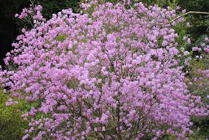 不動産 賃貸 東京 Blogの花