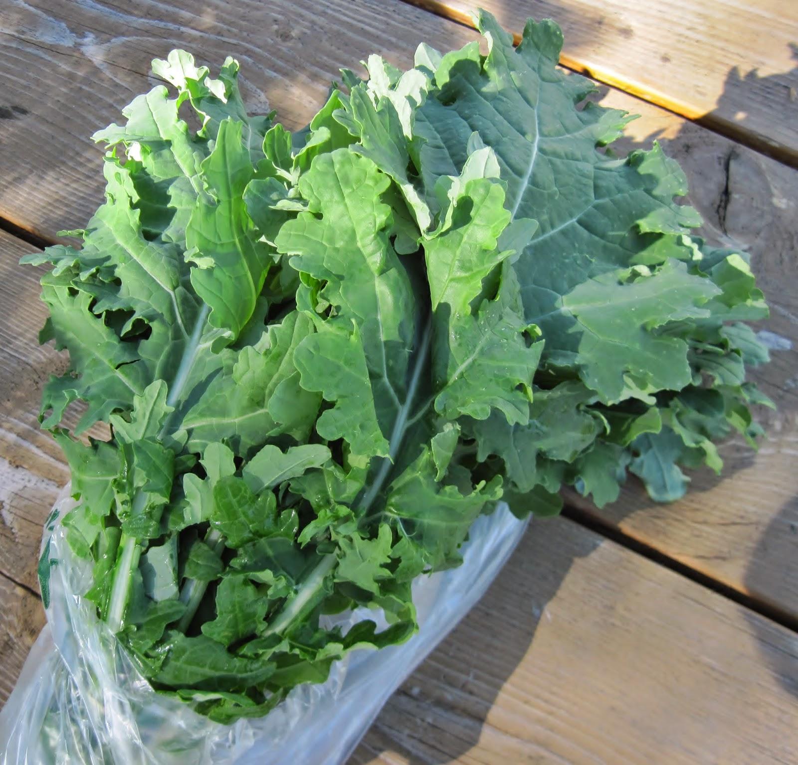 white kale