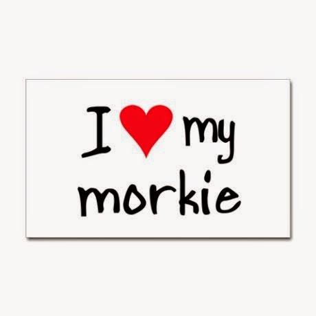 I love my Morkie