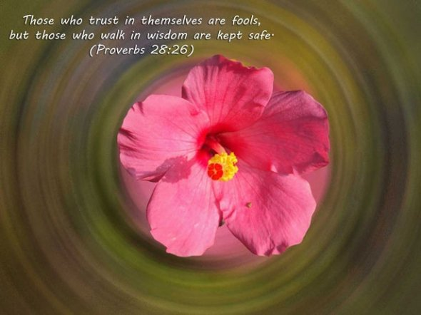 Proverbs Bible Quote Wallpapers | Beautiful Flower Wallpapers