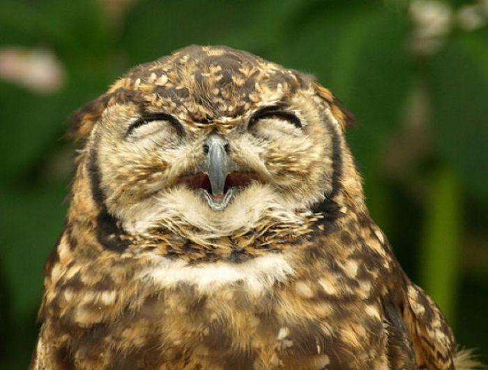 Funny Owl Photos