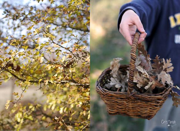 espino y cesto con hojas de roble secas