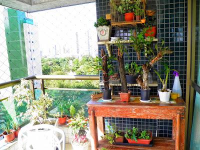 Micro orquídeas; jardinagem; planta na varanda; planta em apartamento; orquídea.