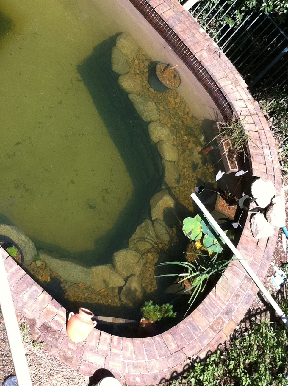 Beryl 39 s natural swim pond blood worms and fish for Fishing worms near me