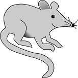 picture of a mouse with a smile