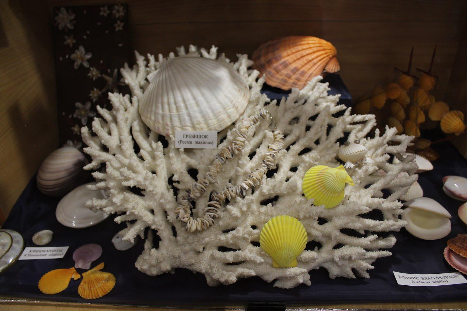 """Выставка """"Загадочный мир океана"""""""