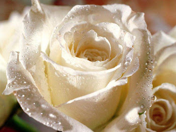 Aninha É Uma Rosa!...